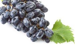 Czarny świeżości winogrono zdjęcie stock