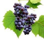 czarny 3 winogron Obrazy Royalty Free
