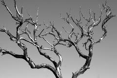 czarny abstrakcyjne białe drzewo Fotografia Stock