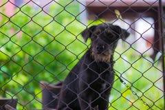 Czarny agresywny pies w klatce Obraz Stock