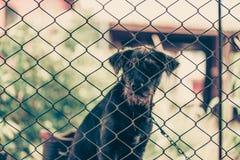 Czarny agresywny pies w klatce Obrazy Stock