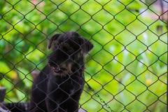 Czarny agresywny pies w klatce Fotografia Stock