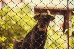 Czarny agresywny pies w klatce Obrazy Royalty Free