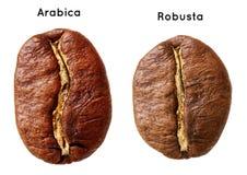 Czarny arabica, robusta kawowa fasola Obrazy Royalty Free