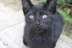 Czarny błękitnooki kot Obraz Stock