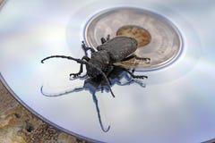 czarny bug dysk laser Obraz Royalty Free