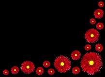czarny centrum kwiatów odosobniony czerwony kolor żółty zdjęcie royalty free
