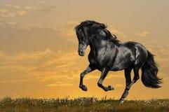 czarny cwału konia bieg Obrazy Stock