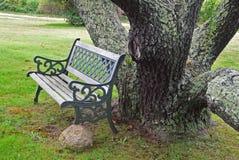 Czarny Czereśniowy drzewo z ławką 3 Obraz Stock