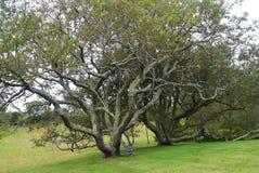 Czarny Czereśniowy drzewo z ławką 4 Fotografia Stock