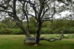 Czarny Czereśniowy drzewo z ławką 3 Obraz Royalty Free