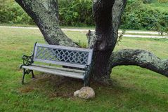 Czarny Czereśniowy drzewo z ławką 6 Zdjęcia Stock