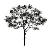 czarny drzewo Zdjęcie Stock