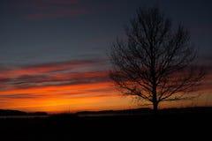 czarny drzewo Fotografia Royalty Free
