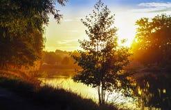czarny drzewo Zdjęcie Royalty Free