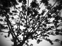 Czarny drzewo Obrazy Stock