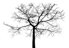 czarny drzewo Fotografia Stock