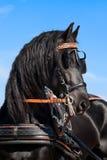 czarny friesian konia niebo Zdjęcia Royalty Free