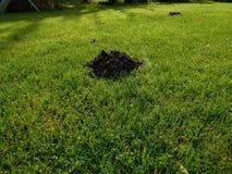 Czarny gliniany kretowisko w trawie na ogródzie Zdjęcie Royalty Free