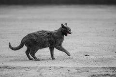 Czarny gniewny kot obrazy stock