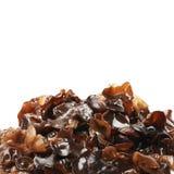 czarny grzyb obrazy stock