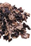 czarny grzyb obrazy royalty free