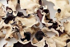 Czarny grzyb fotografia stock
