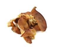 czarny grzyb zdjęcia stock