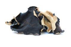 czarny grzyb Fotografia Royalty Free