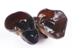 Czarny grzyb, biały tło, jadalny grzyb obrazy royalty free