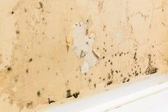 Czarny grzyb na ścianach zdjęcie stock