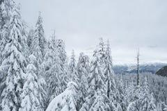 Czarny Halny snowshoe ślad Fotografia Stock