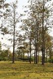 Czarny hamak w parku Fotografia Stock