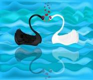 Czarny i biały łabędź Zdjęcie Royalty Free