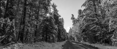 Czarny i biały, śnieg zakrywał sosny - piękni lasy wzdłuż wiejskich dróg Zdjęcia Stock