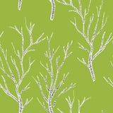 Czarny i biały brzoz drzewa na zielonej trawie w wiosna bezszwowym wzorze, wektor ilustracji