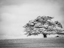 Czarny i biały cienia drzewo obraz stock