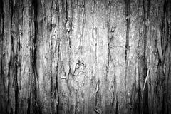 Czarny i biały drewnianego pionowo tekstury grunge tła â€' Metasequoia drzewna barkentyna Obraz Stock
