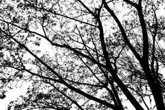 Czarny i biały drzewa zdjęcie stock