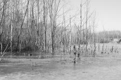 Czarny i biały drzewa na brzeg marznęli w lód Fotografia Stock