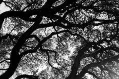 Czarny i biały drzewnej kończyny textured tło zdjęcie stock