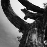 Czarny i biały drzewo Obraz Stock