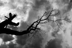 Czarny i biały drzewo i niebo zdjęcie royalty free