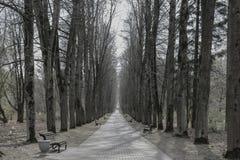 Czarny i biały fotografia aleja w parku zdjęcia stock