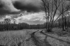 Czarny i biały fotografia droga w lesie z drzewem i chmurami w niebie zdjęcia royalty free