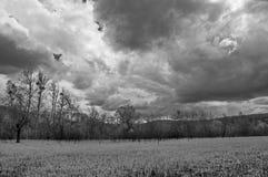 Czarny i biały fotografia pole z lasem wzdłuż chmur w niebie i krawędzi zdjęcia royalty free