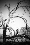 Czarny i biały fotografia romantyczna pary dziewczyna, chłopak ma zabawy lata parka i Zdjęcie Royalty Free