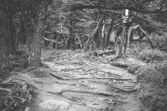 Czarny i biały fotografia suche gałąź w forestShevelev zdjęcia royalty free