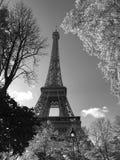 Czarny i biały fotografia wieża eifla w jesieni, Paryż, Francja obrazy stock