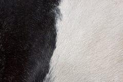 Czarny i biały futerkowy tło Obraz Stock
